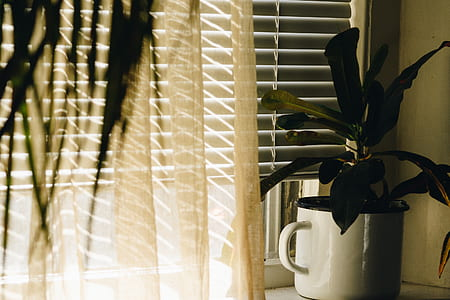 zip blinds singapore